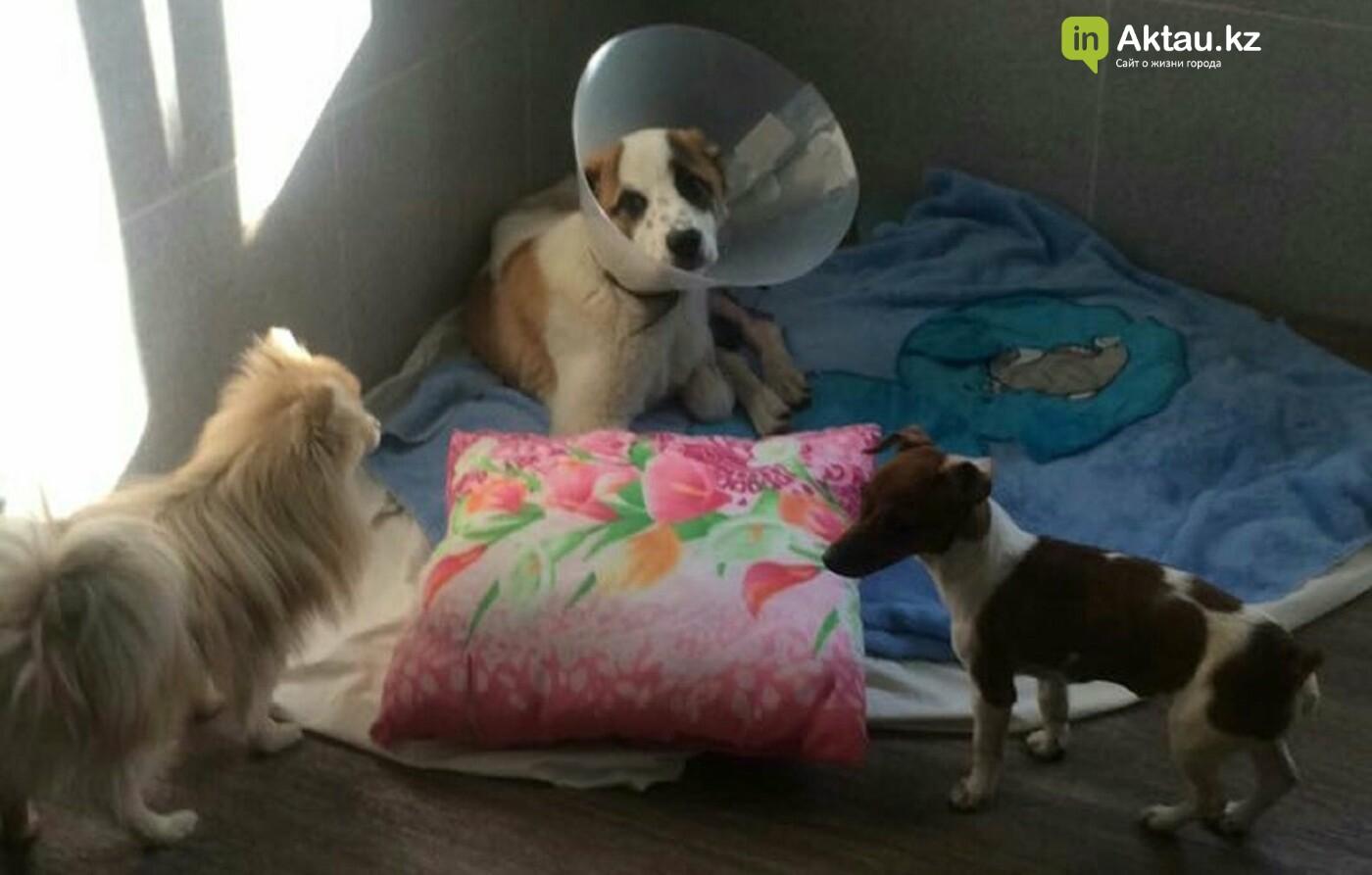История щенка Кенди: новый хозяин ждет его в Актау, фото-1