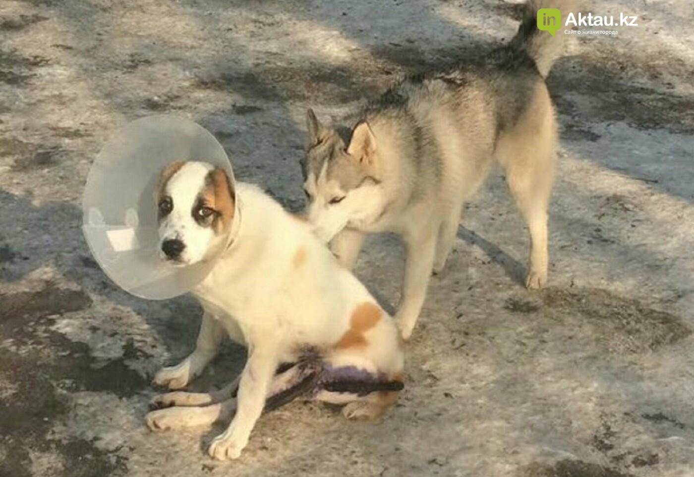 История щенка Кенди: новый хозяин ждет его в Актау, фото-2
