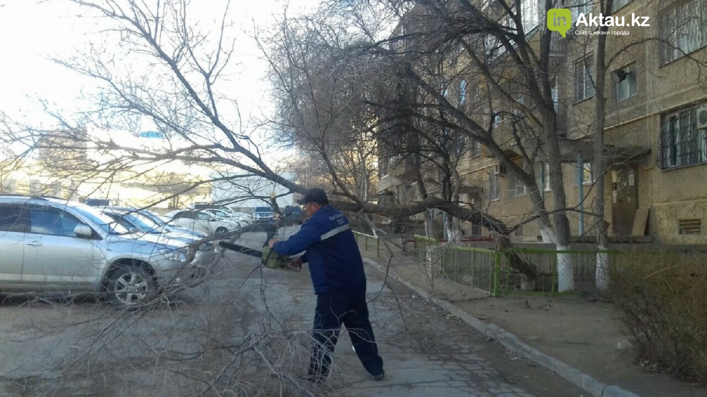 В Актау из-за сильного ветра пострадали двадцатилетние деревья, фото-5