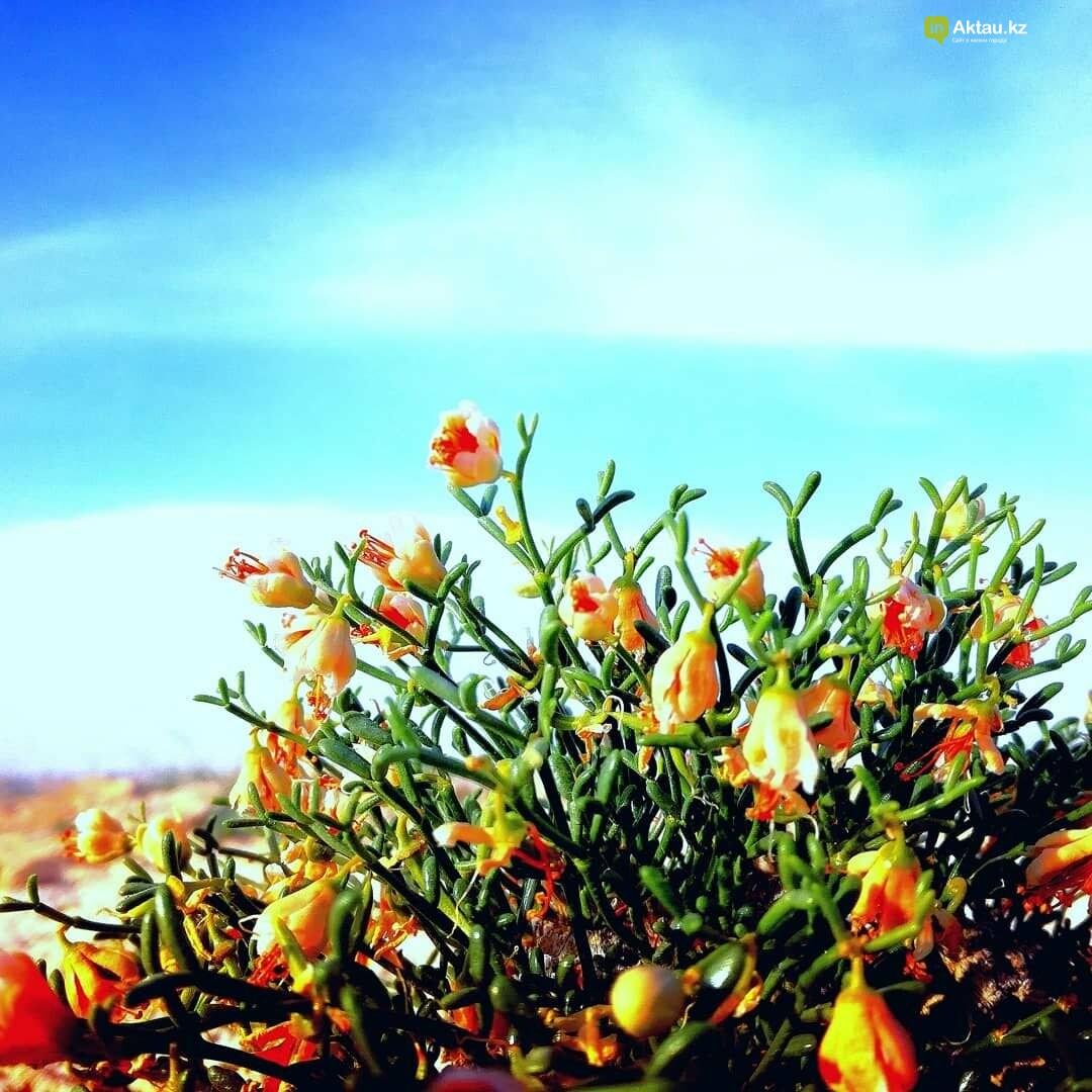 Красота под ногами (ФОТО), фото-1