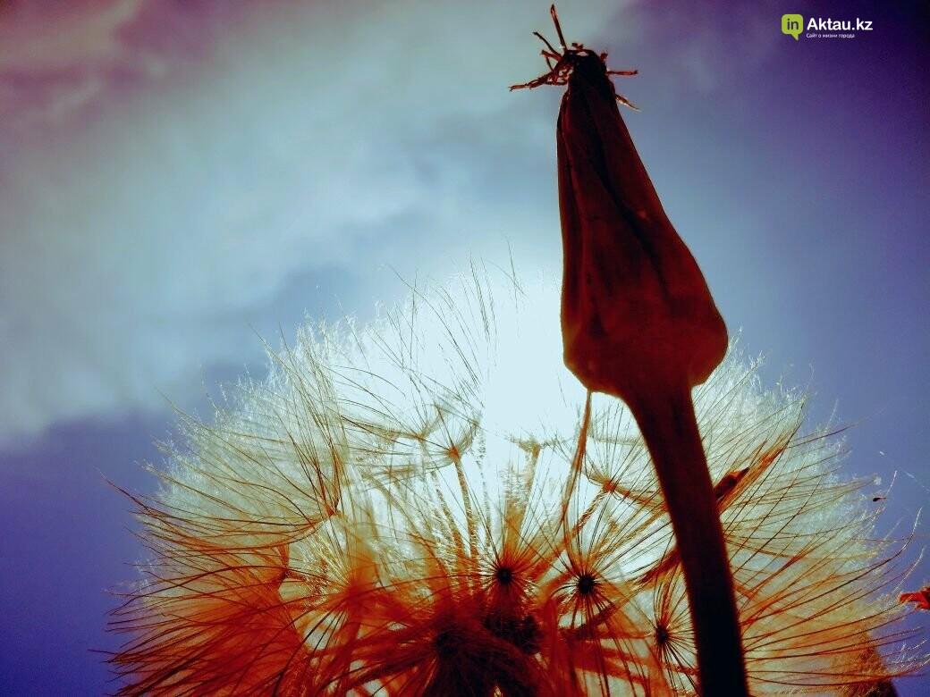 Упавшая земля (ФОТО), фото-20