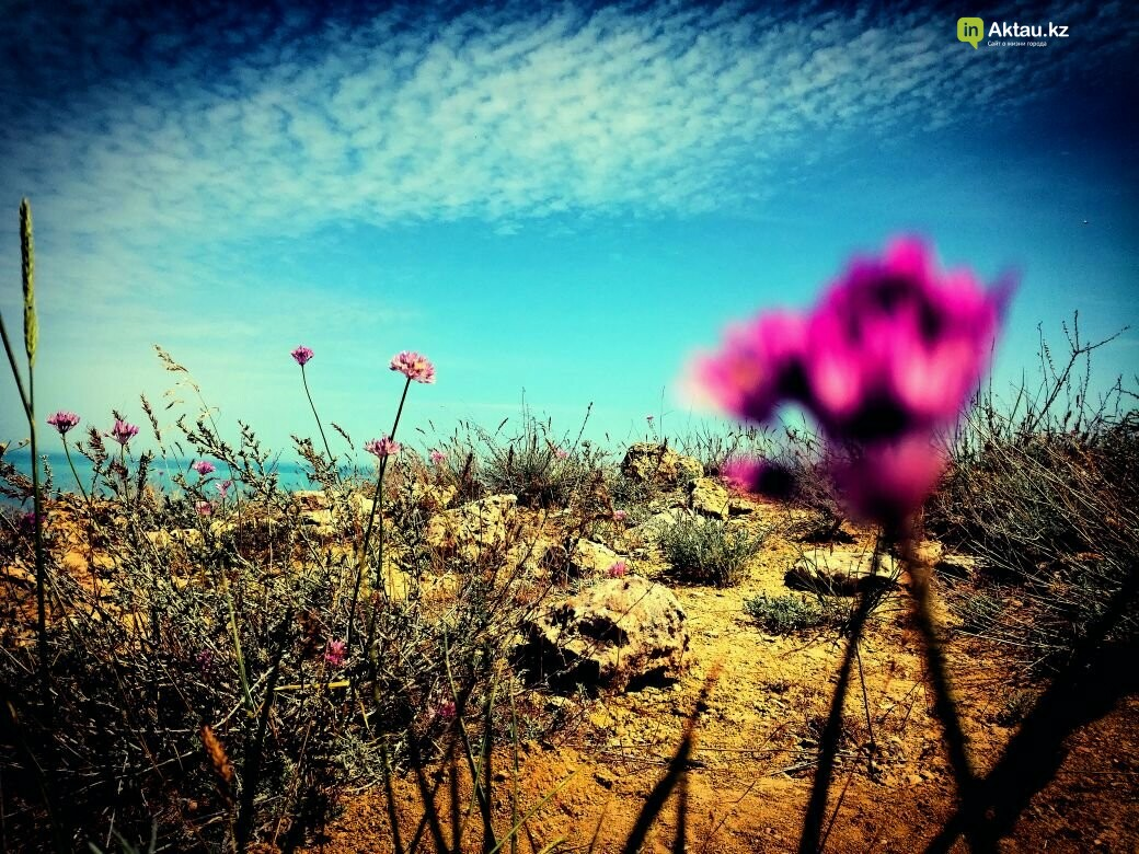 Упавшая земля (ФОТО), фото-27