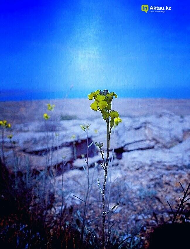Упавшая земля (ФОТО), фото-24