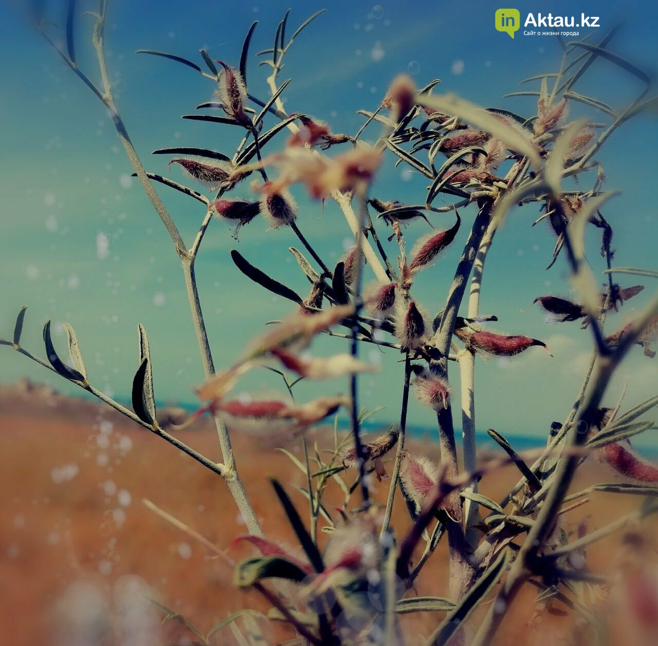 Упавшая земля (ФОТО), фото-26