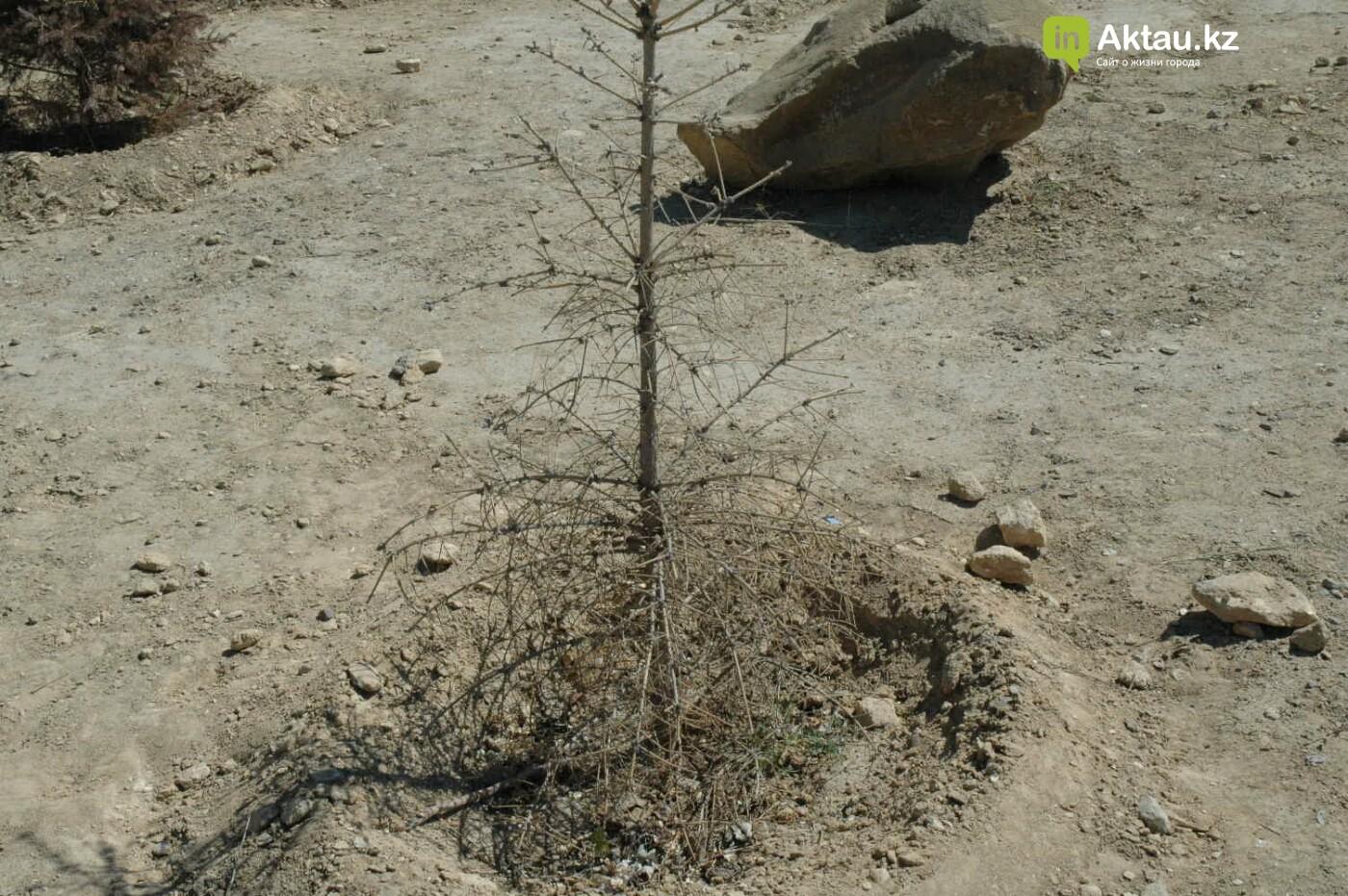 Погибшие от засухи и обезвоживания в Актау исчисляются десятками (ФОТО), фото-4