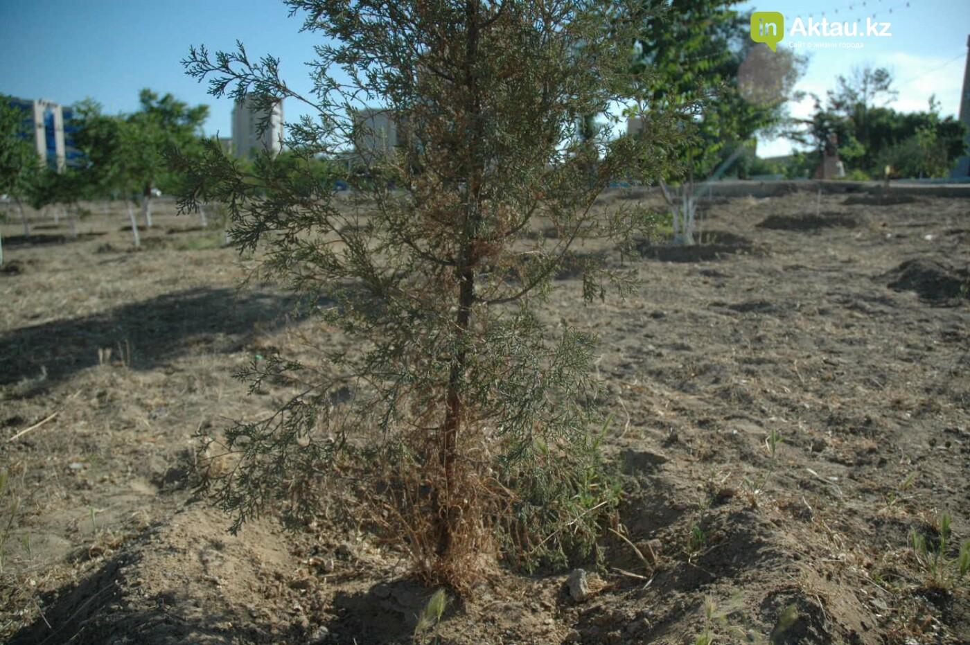 Погибшие от засухи и обезвоживания в Актау исчисляются десятками (ФОТО), фото-10
