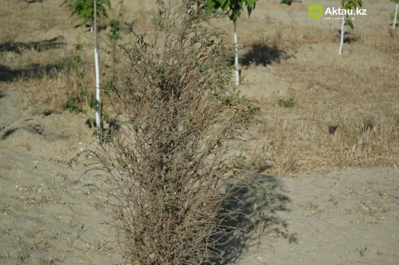 Погибшие от засухи и обезвоживания в Актау исчисляются десятками (ФОТО), фото-14