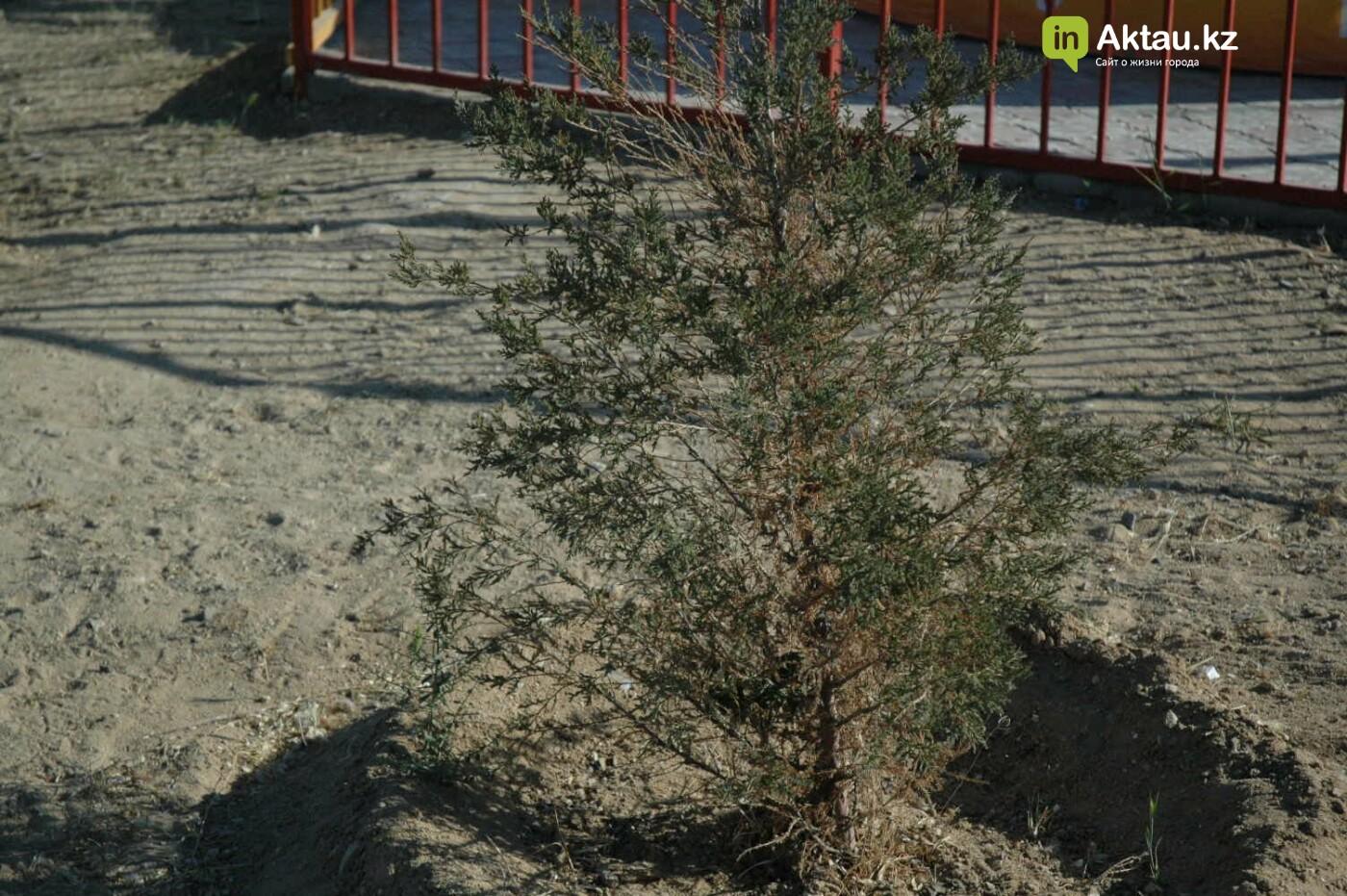 Погибшие от засухи и обезвоживания в Актау исчисляются десятками (ФОТО), фото-13