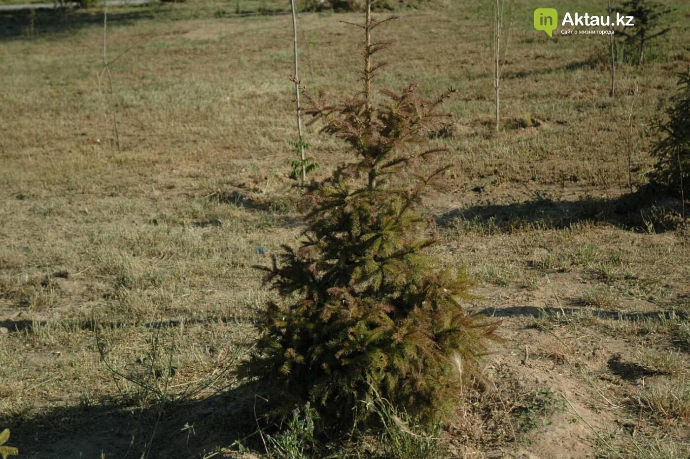Погибшие от засухи и обезвоживания в Актау исчисляются десятками (ФОТО), фото-6