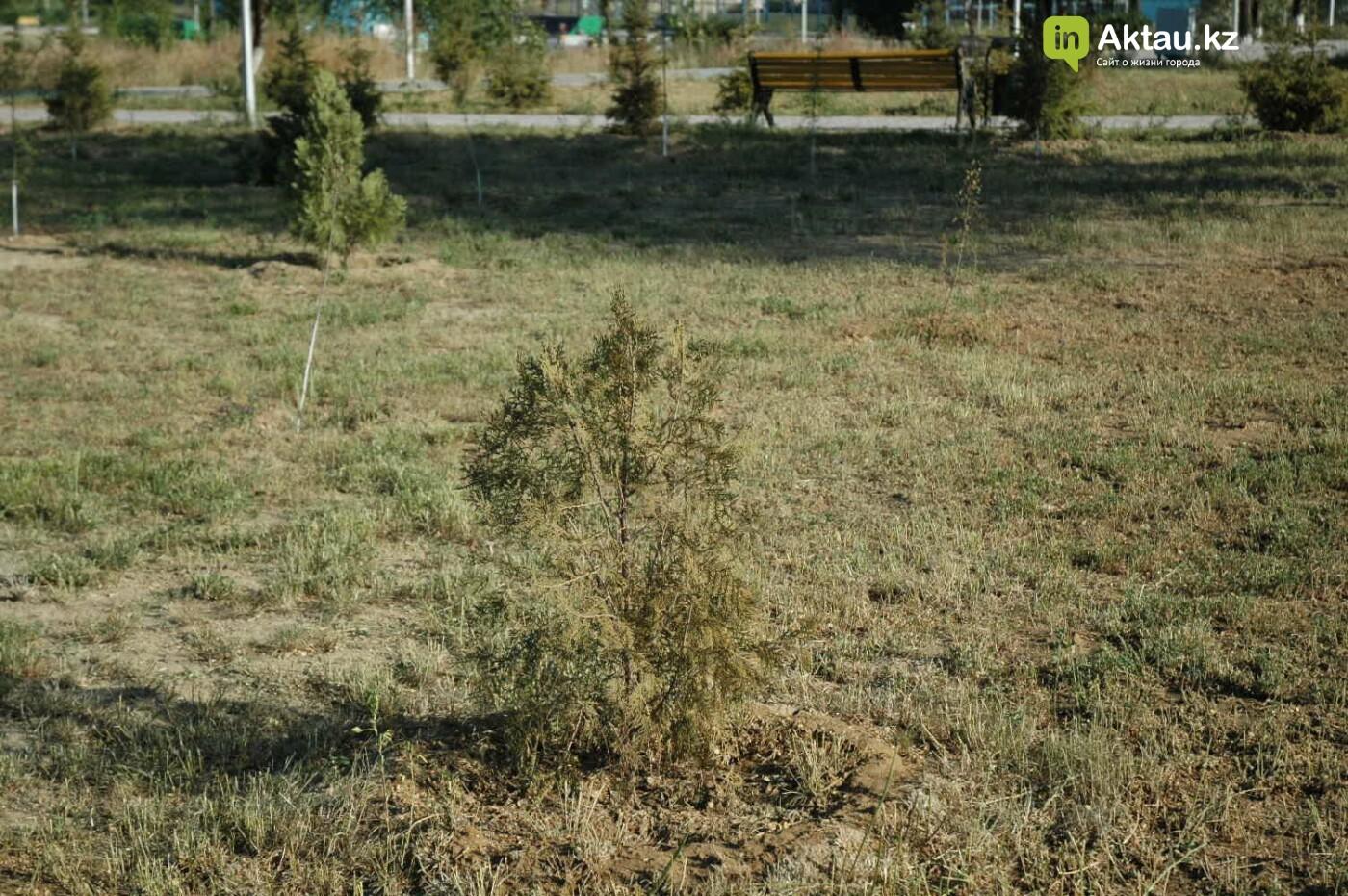 Погибшие от засухи и обезвоживания в Актау исчисляются десятками (ФОТО), фото-9
