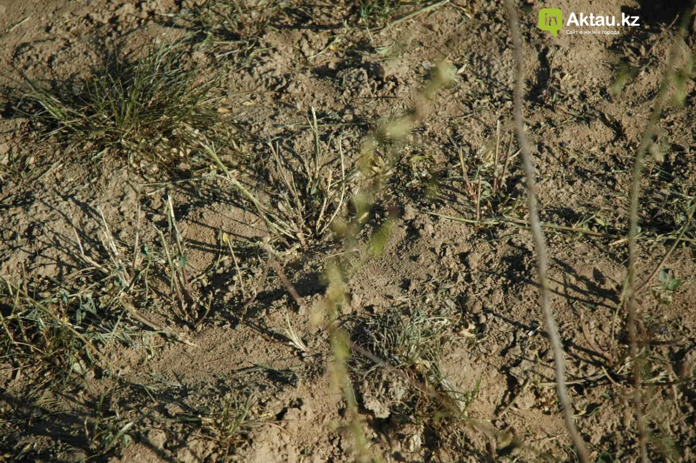 Погибшие от засухи и обезвоживания в Актау исчисляются десятками (ФОТО), фото-8