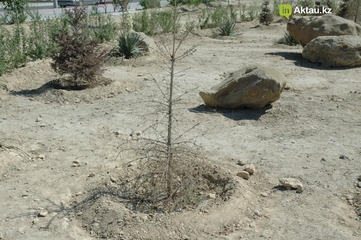 Погибшие от засухи и обезвоживания в Актау исчисляются десятками (ФОТО), фото-31