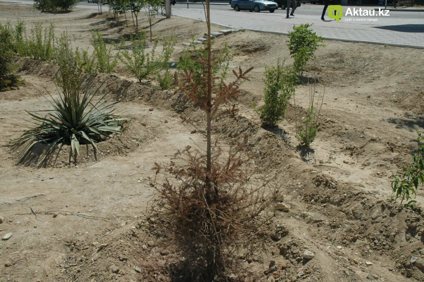 Погибшие от засухи и обезвоживания в Актау исчисляются десятками (ФОТО), фото-25