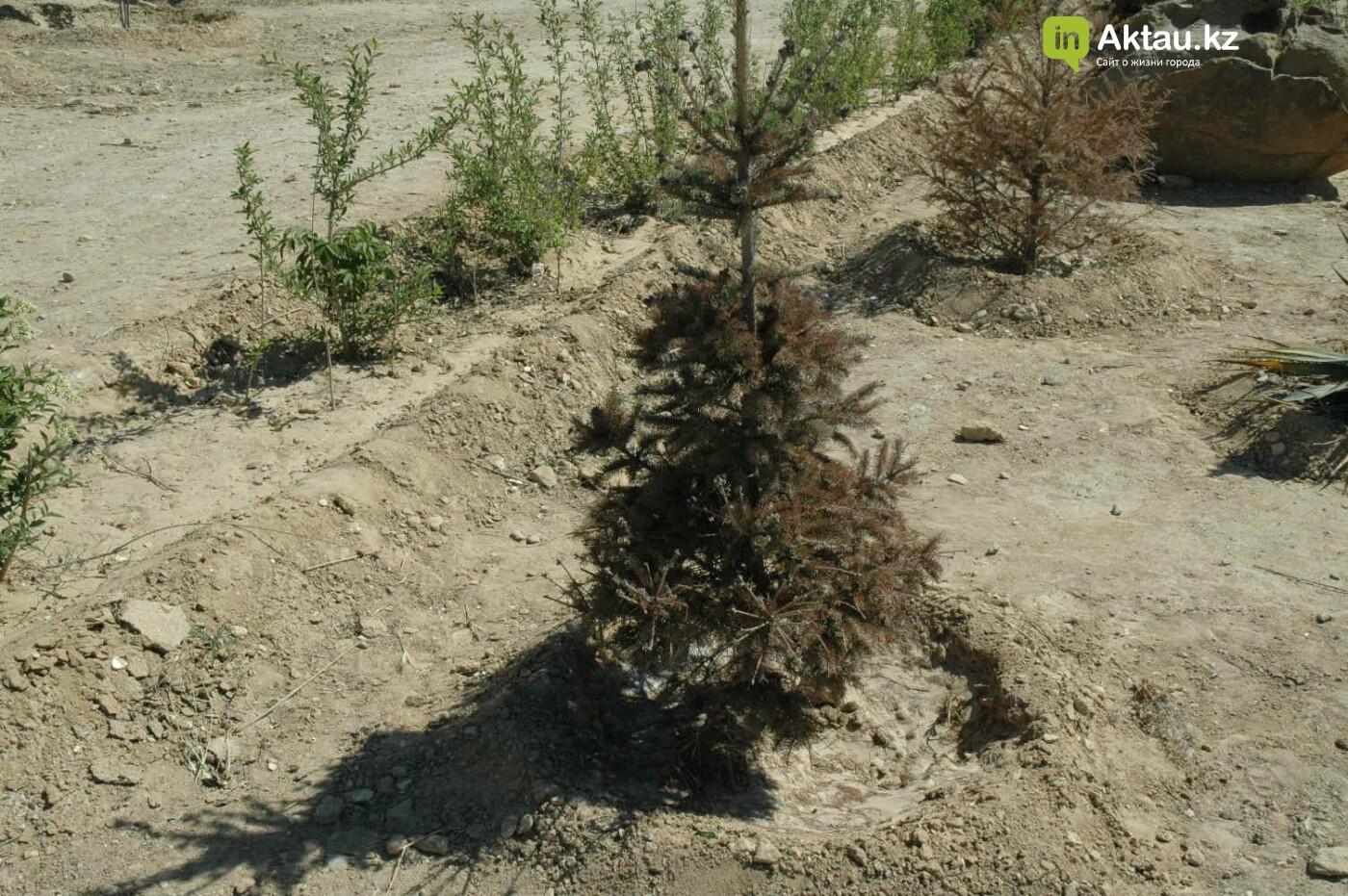 Погибшие от засухи и обезвоживания в Актау исчисляются десятками (ФОТО), фото-30