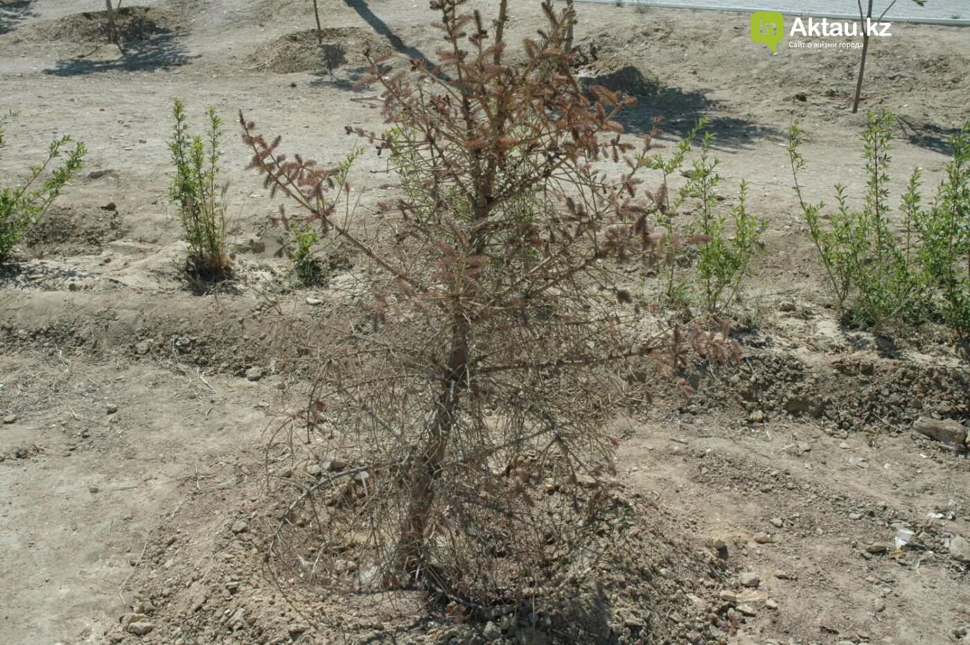 Погибшие от засухи и обезвоживания в Актау исчисляются десятками (ФОТО), фото-28