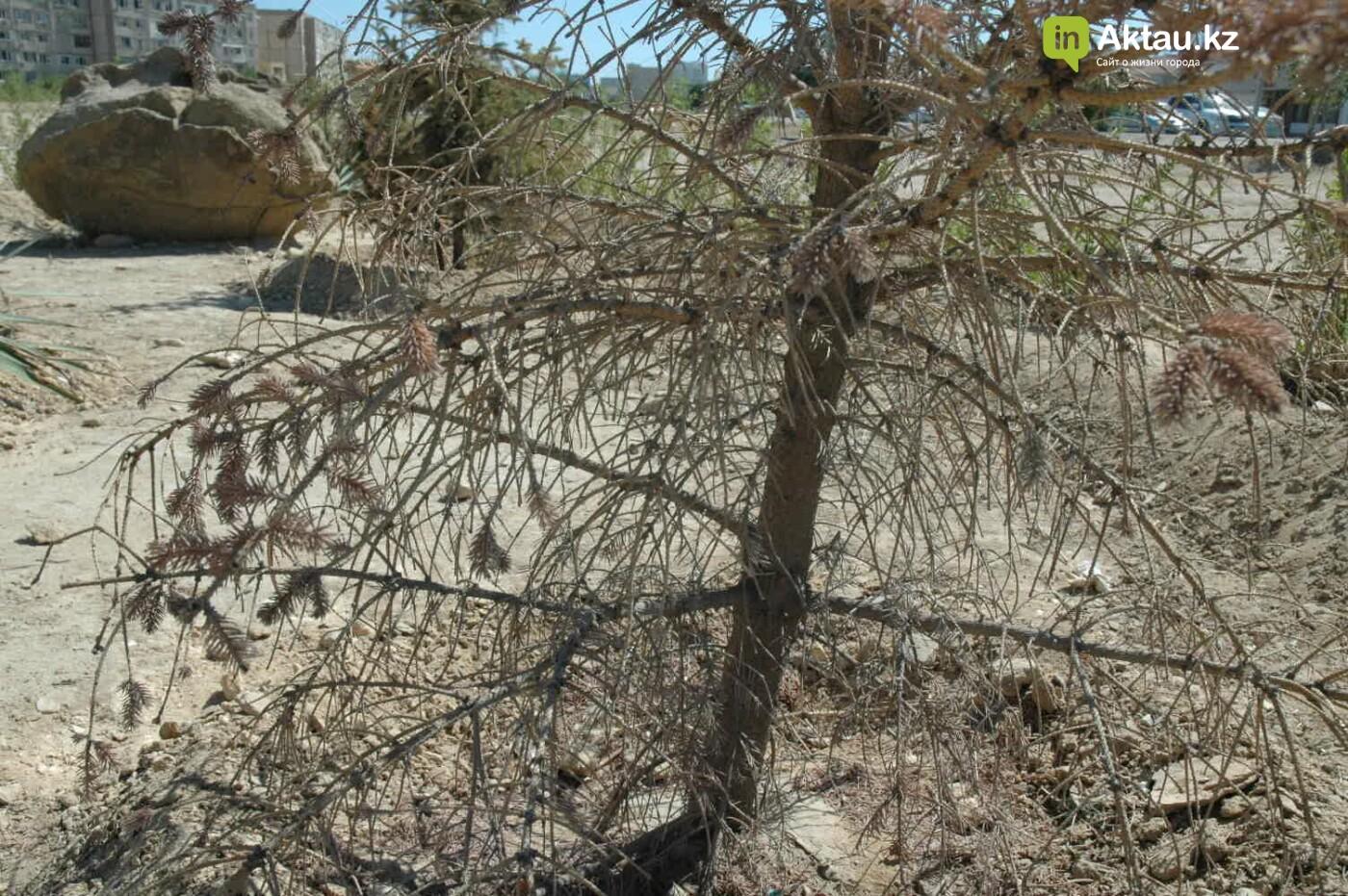 Погибшие от засухи и обезвоживания в Актау исчисляются десятками (ФОТО), фото-33