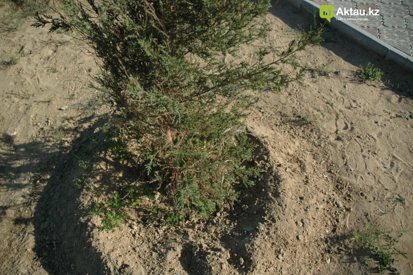 Погибшие от засухи и обезвоживания в Актау исчисляются десятками (ФОТО), фото-35