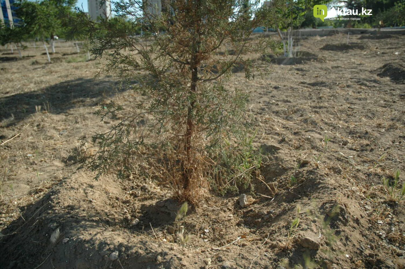 Погибшие от засухи и обезвоживания в Актау исчисляются десятками (ФОТО), фото-36