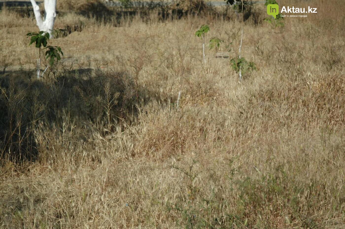 Погибшие от засухи и обезвоживания в Актау исчисляются десятками (ФОТО), фото-37