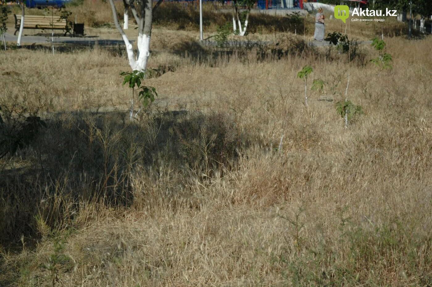 Погибшие от засухи и обезвоживания в Актау исчисляются десятками (ФОТО), фото-42