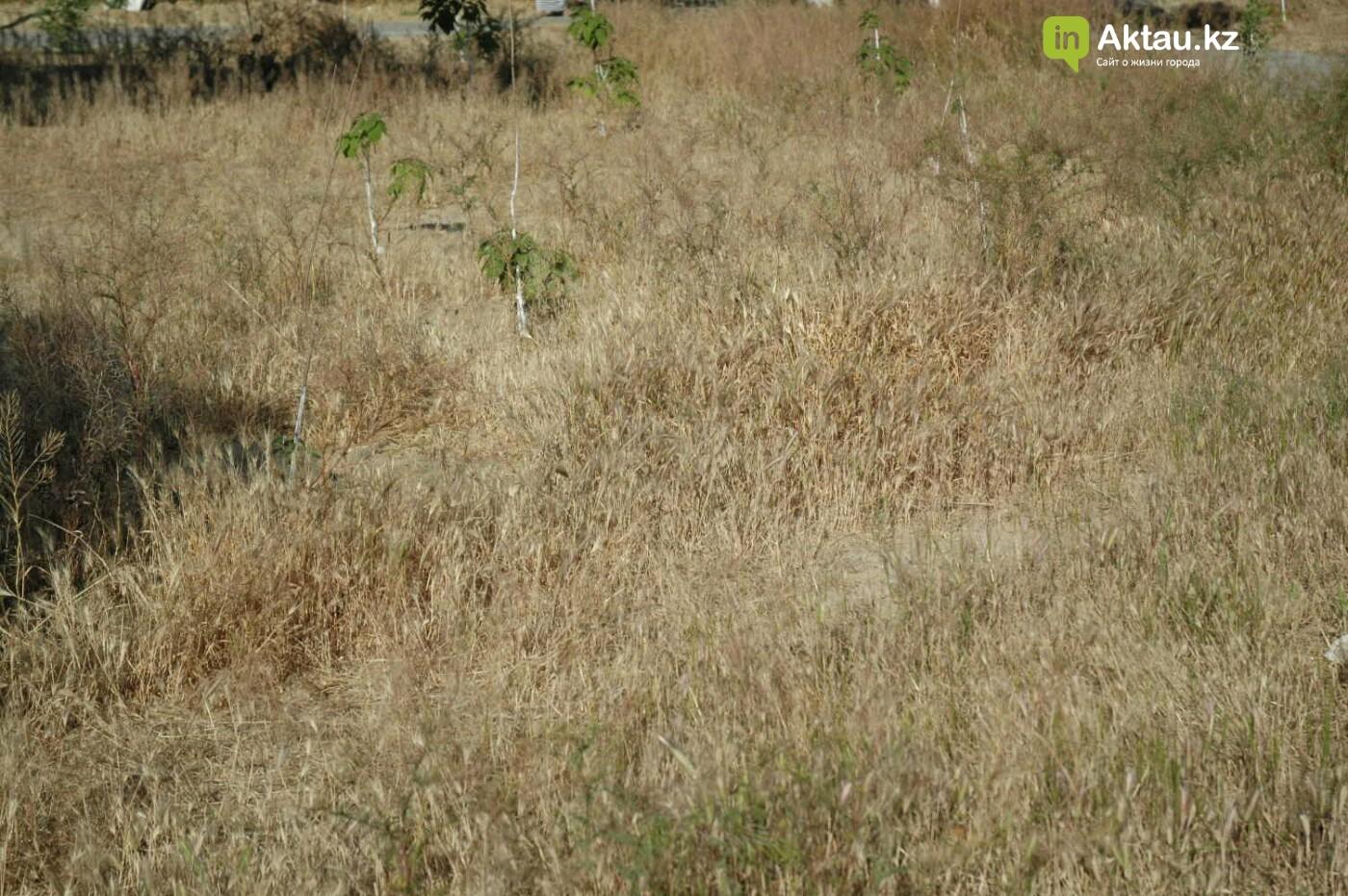 Погибшие от засухи и обезвоживания в Актау исчисляются десятками (ФОТО), фото-38