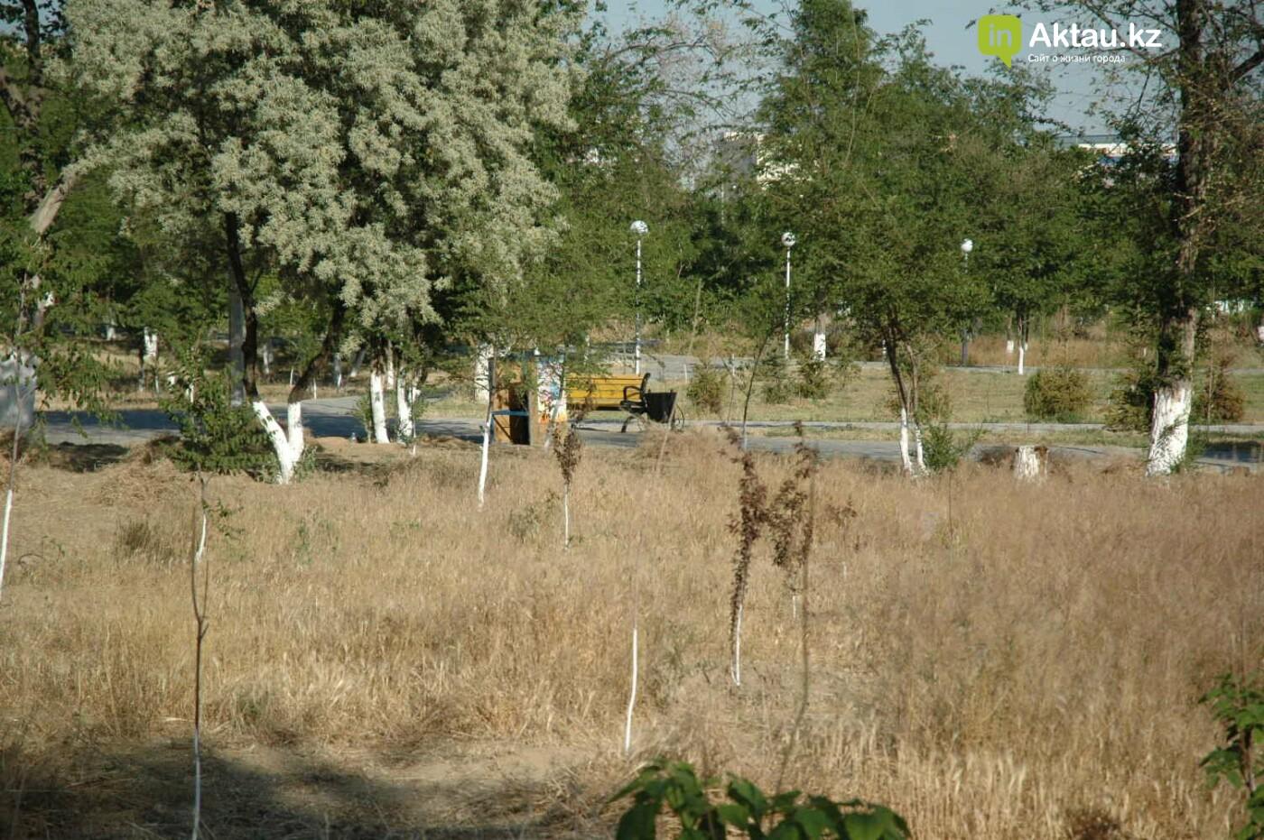 Погибшие от засухи и обезвоживания в Актау исчисляются десятками (ФОТО), фото-48