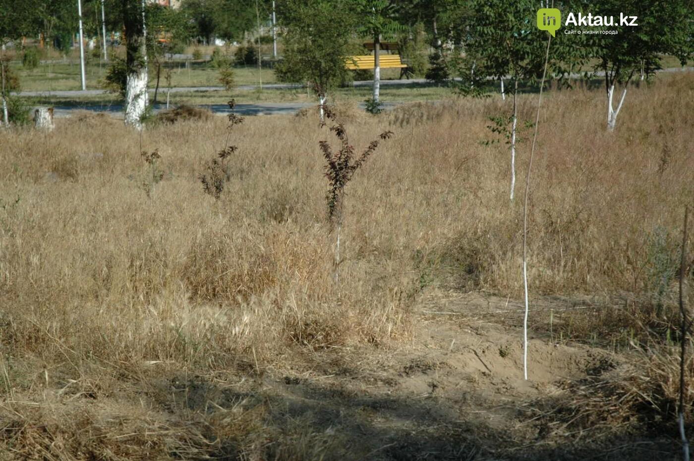 Погибшие от засухи и обезвоживания в Актау исчисляются десятками (ФОТО), фото-41