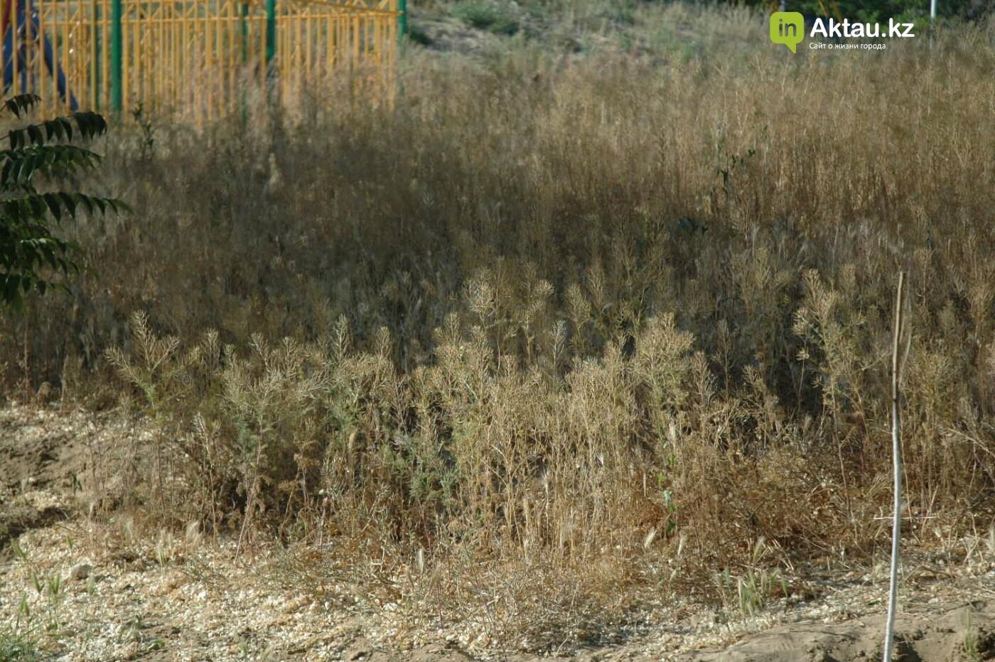 Погибшие от засухи и обезвоживания в Актау исчисляются десятками (ФОТО), фото-49