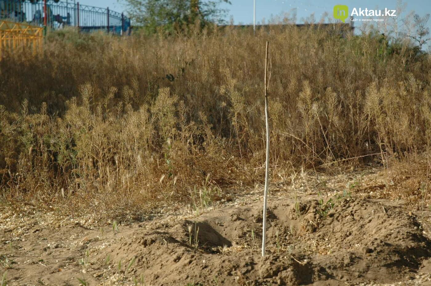 Погибшие от засухи и обезвоживания в Актау исчисляются десятками (ФОТО), фото-47