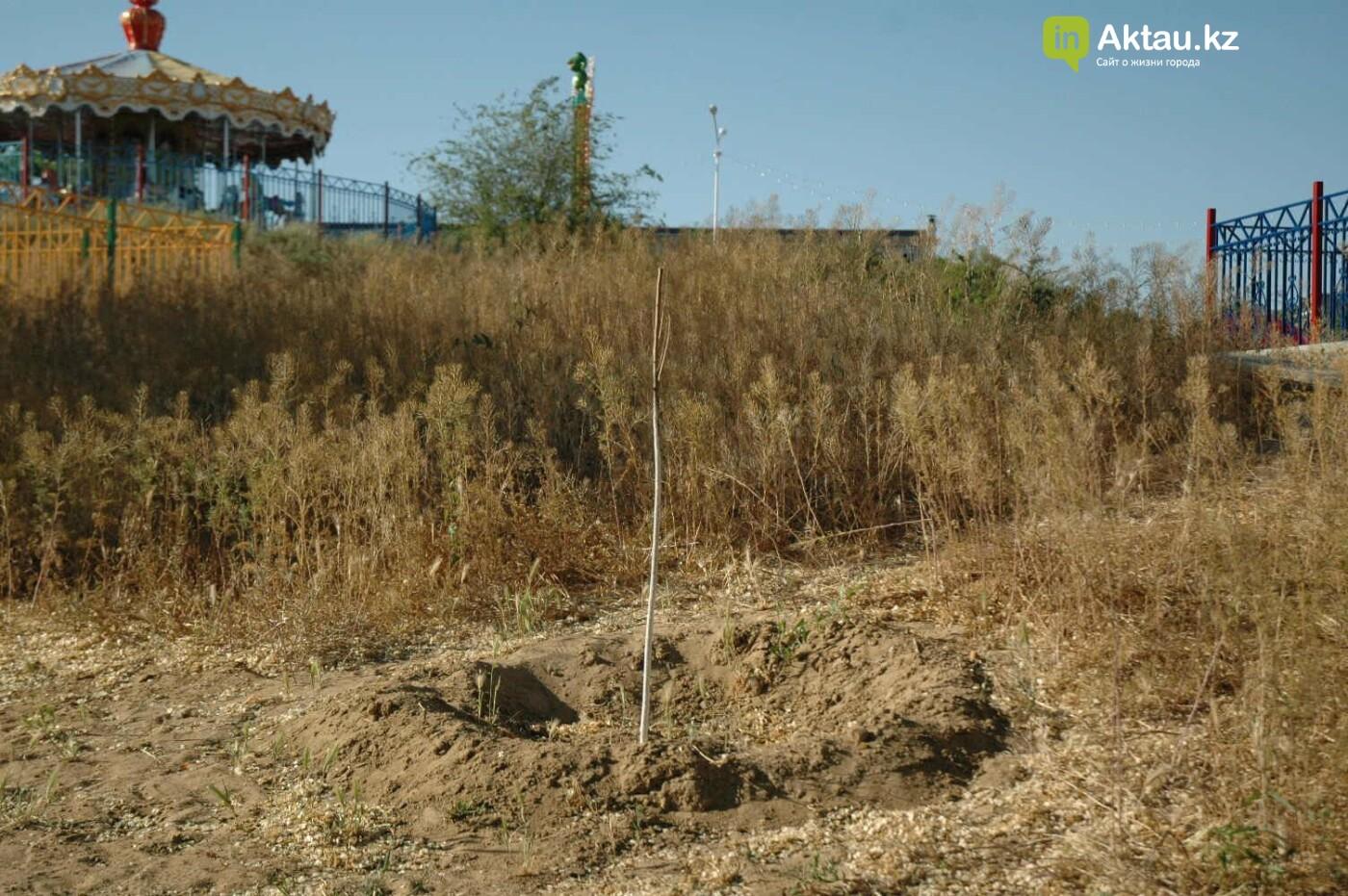Погибшие от засухи и обезвоживания в Актау исчисляются десятками (ФОТО), фото-45