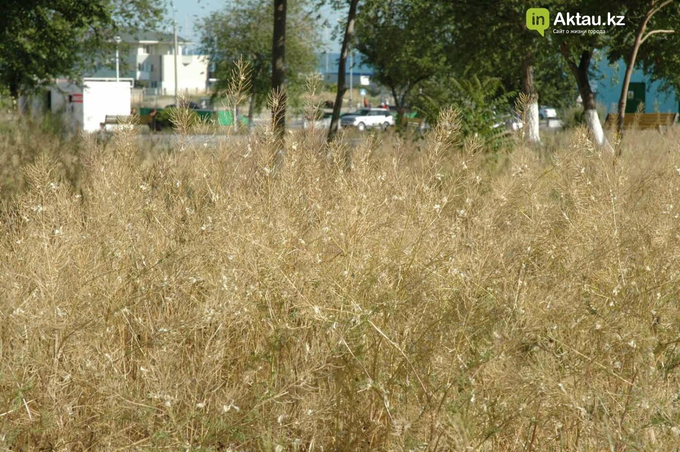 Погибшие от засухи и обезвоживания в Актау исчисляются десятками (ФОТО), фото-39