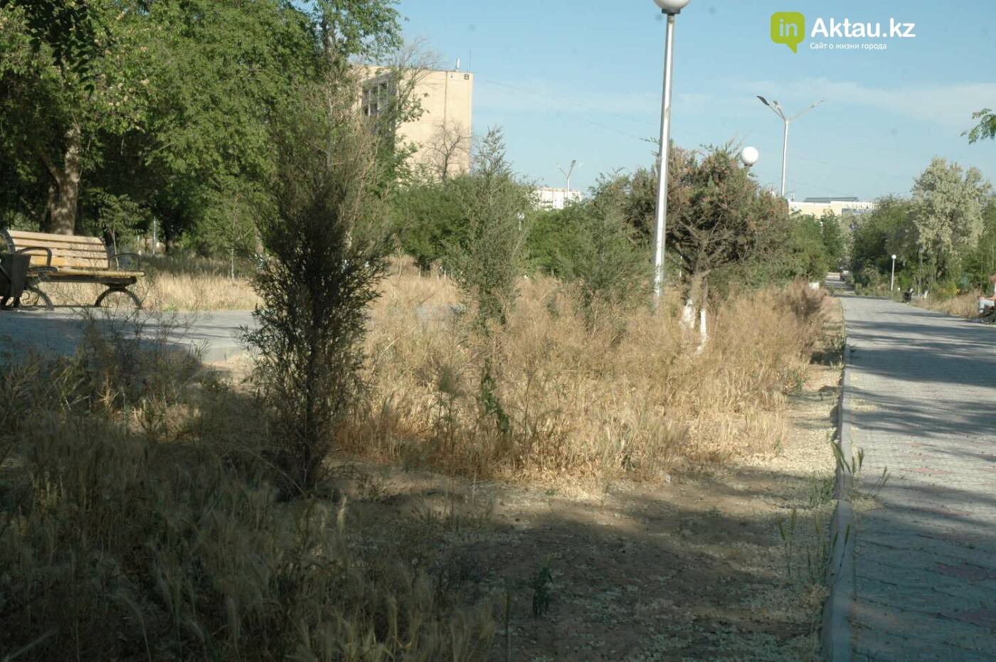 Погибшие от засухи и обезвоживания в Актау исчисляются десятками (ФОТО), фото-2