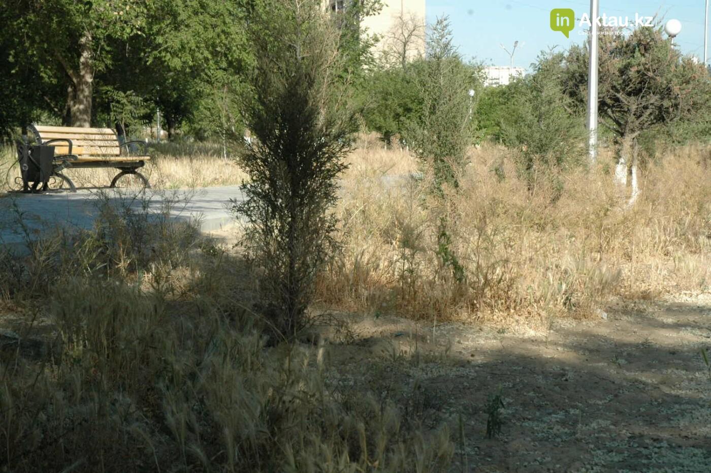Погибшие от засухи и обезвоживания в Актау исчисляются десятками (ФОТО), фото-50