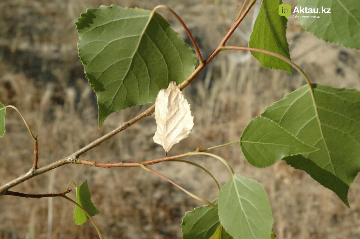 Погибшие от засухи и обезвоживания в Актау исчисляются десятками (ФОТО), фото-15