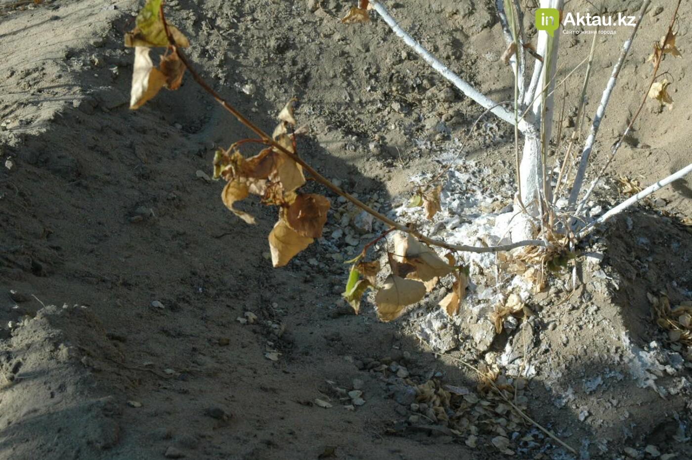 Погибшие от засухи и обезвоживания в Актау исчисляются десятками (ФОТО), фото-20