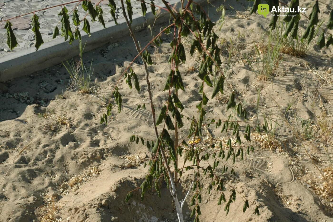 Погибшие от засухи и обезвоживания в Актау исчисляются десятками (ФОТО), фото-1
