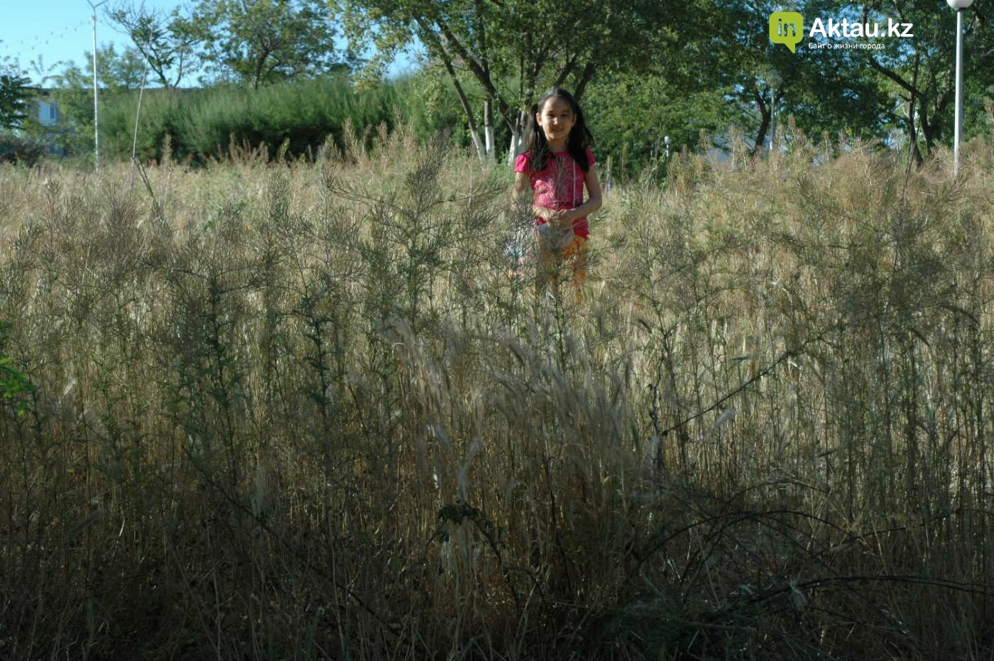 Погибшие от засухи и обезвоживания в Актау исчисляются десятками (ФОТО), фото-43