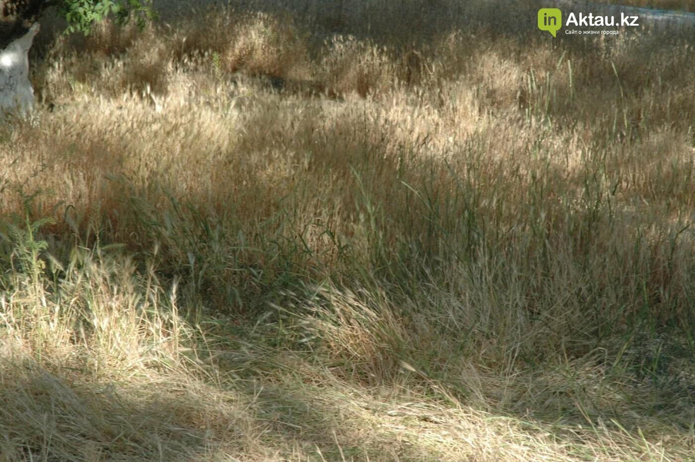Погибшие от засухи и обезвоживания в Актау исчисляются десятками (ФОТО), фото-40