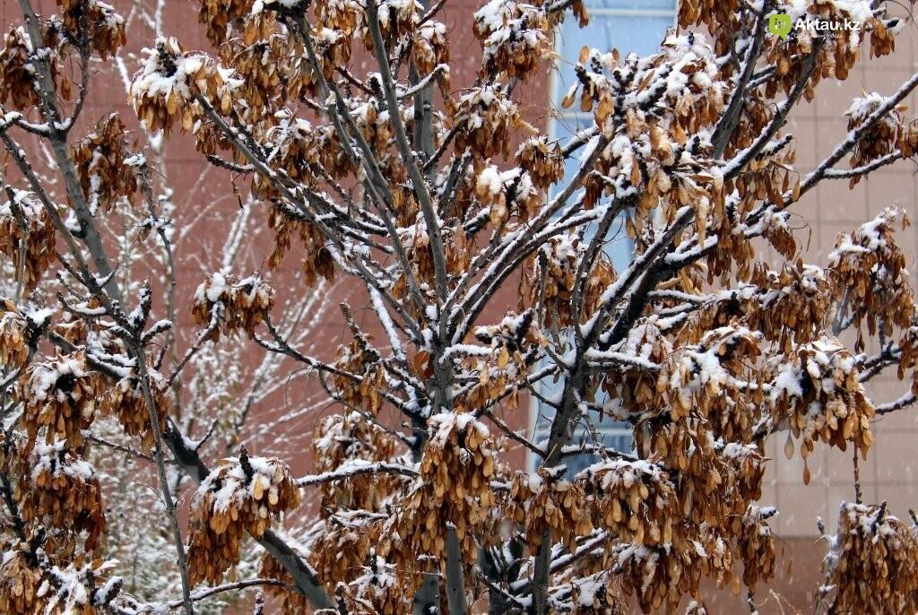 Первый снег в Актау в новом году (ФОТОПОСТ), фото-7