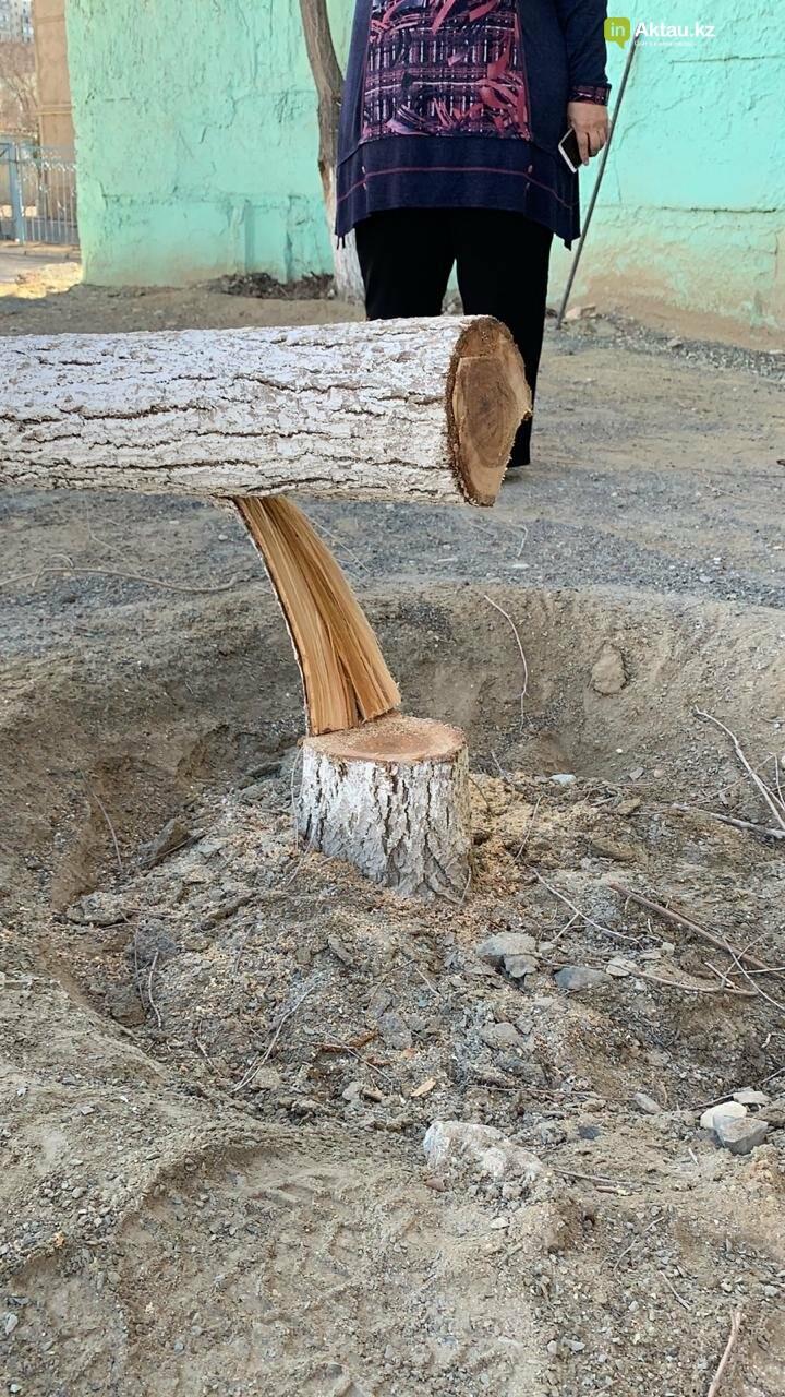 Жильцы 15 микрорайона Актау пожаловались на спиливание деревьев (ВИДЕО), фото-2