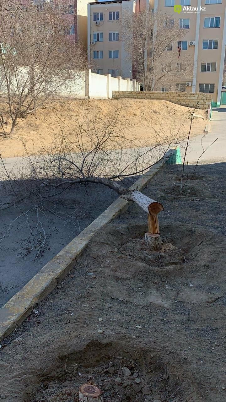 Жильцы 15 микрорайона Актау пожаловались на спиливание деревьев (ВИДЕО), фото-3