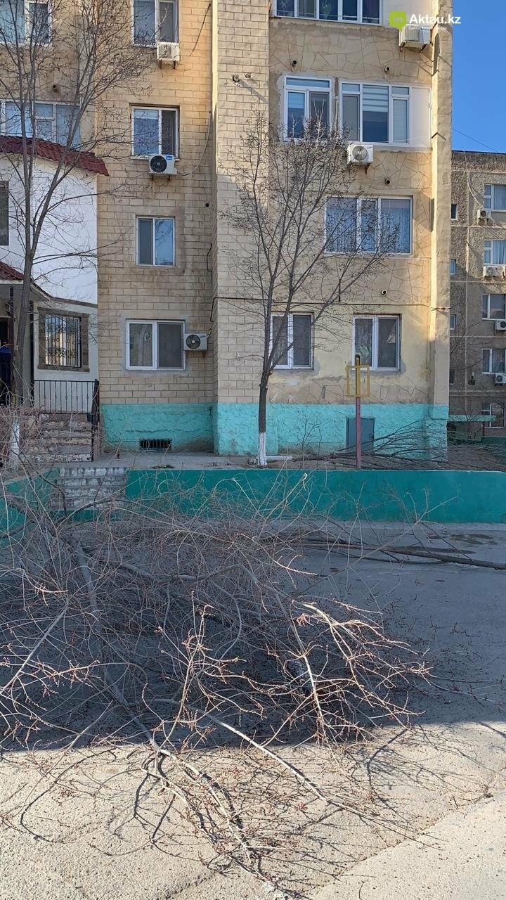 Жильцы 15 микрорайона Актау пожаловались на спиливание деревьев (ВИДЕО), фото-4