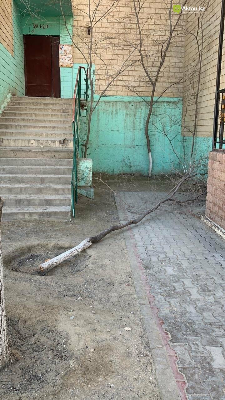 Жильцы 15 микрорайона Актау пожаловались на спиливание деревьев (ВИДЕО), фото-5