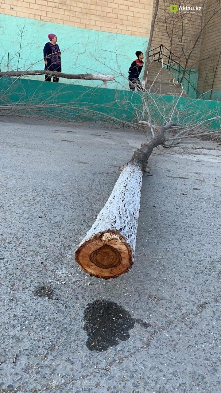 Жильцы 15 микрорайона Актау пожаловались на спиливание деревьев (ВИДЕО), фото-6