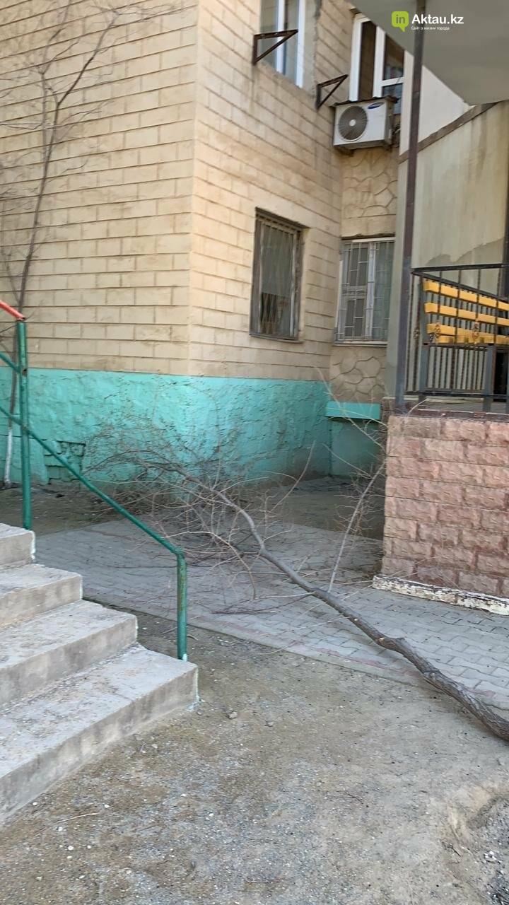 Жильцы 15 микрорайона Актау пожаловались на спиливание деревьев (ВИДЕО), фото-9