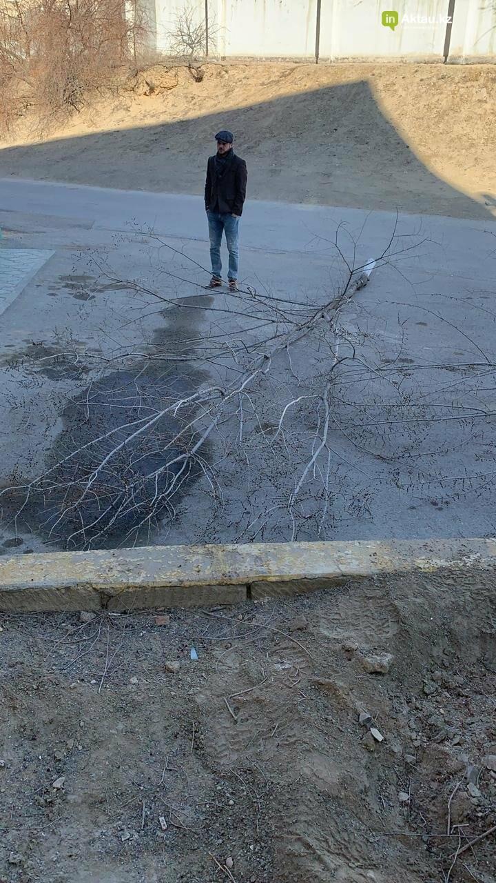 Жильцы 15 микрорайона Актау пожаловались на спиливание деревьев (ВИДЕО), фото-11