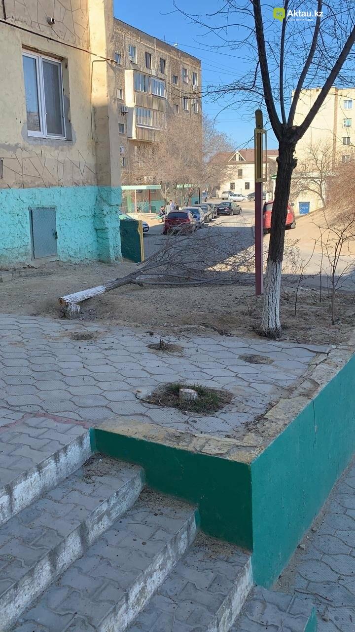 Жильцы 15 микрорайона Актау пожаловались на спиливание деревьев (ВИДЕО), фото-12