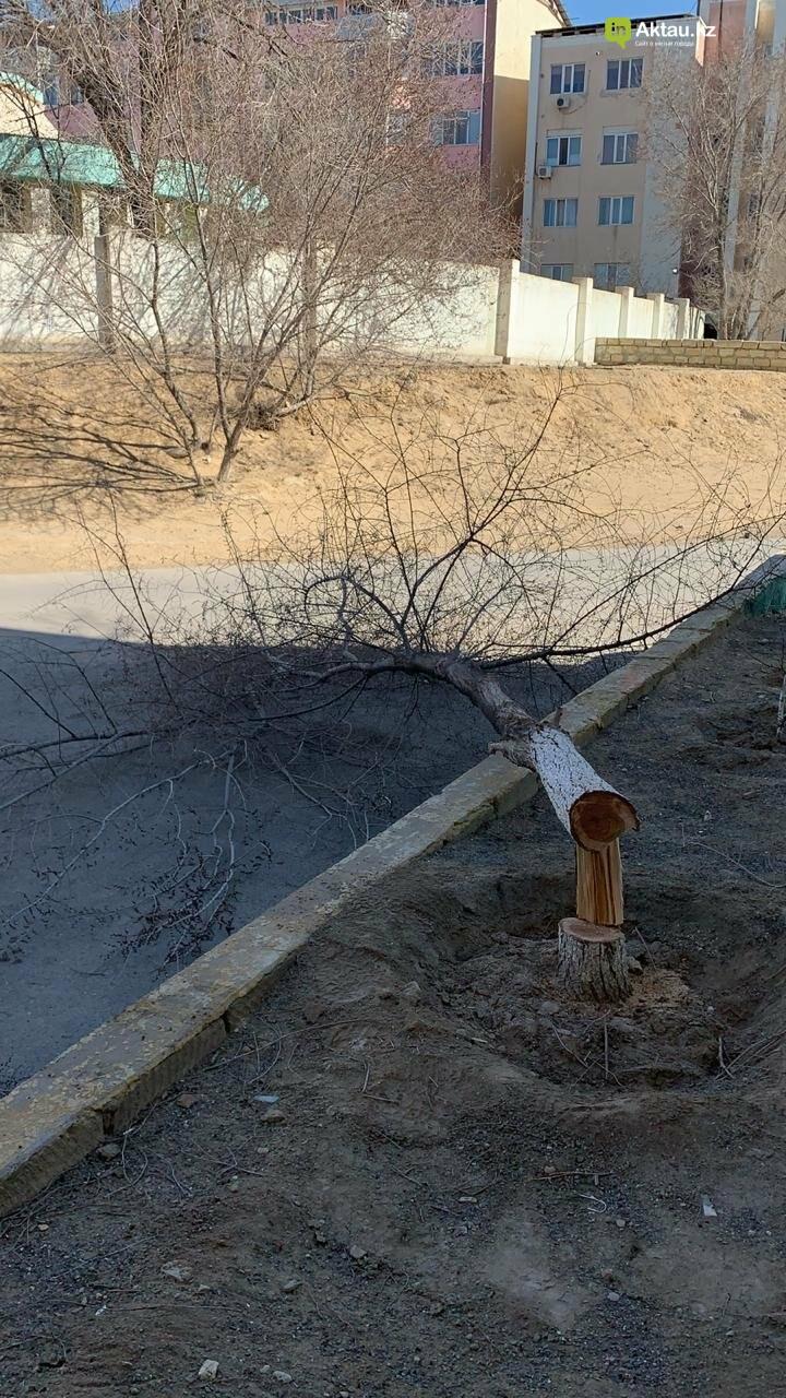 Жильцы 15 микрорайона Актау пожаловались на спиливание деревьев (ВИДЕО), фото-13
