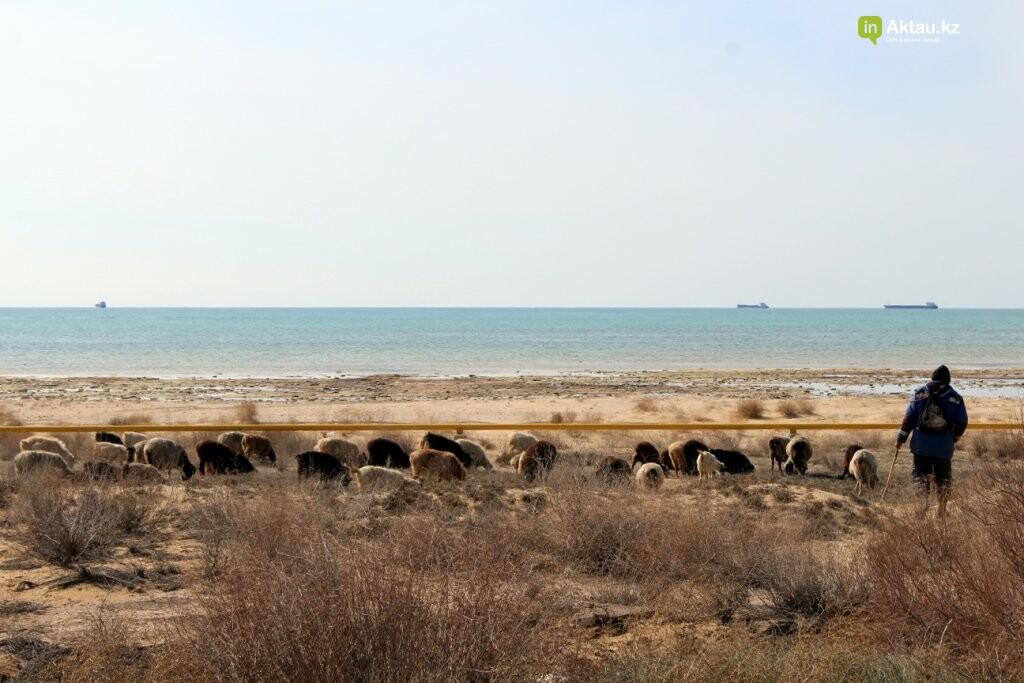Дорога к морю: о состоянии дорог к побережью Каспия (ФОТО), фото-6
