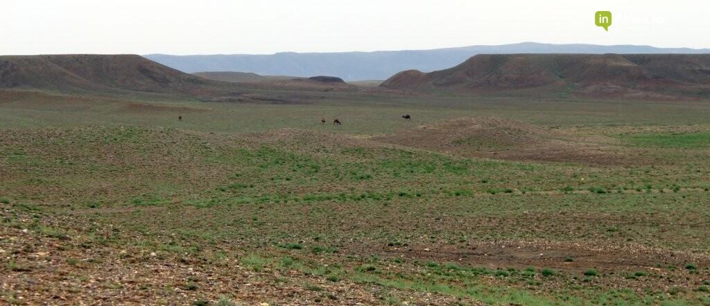 Мангистауская степь проснулась (ФОТО), фото-6